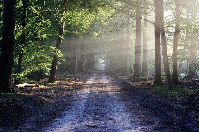 Lång gernom ett skogsbryn